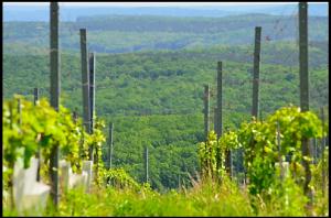 Eisenbergs Weingärten